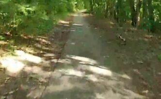 Door het bos fietsen op de duofiets