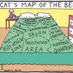 De verschillende zones van het bed, gezien door katten.